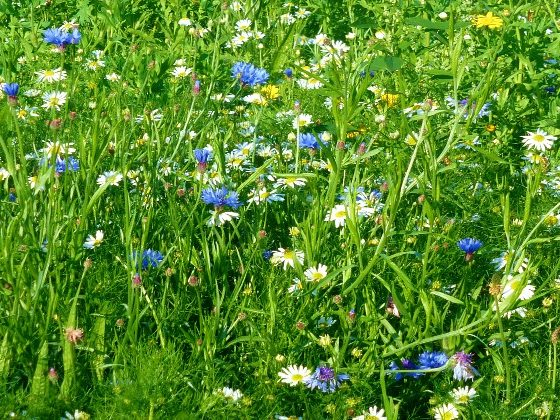 wildflower meadows, yurts, family holiday, Wales holiday, camping, glamping, nature, eco-holiday
